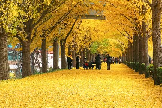 Những đường cây mùa thu đẹp nhất thế giới - Ảnh 1.