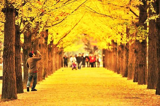 Những đường cây mùa thu đẹp nhất thế giới - Ảnh 2.