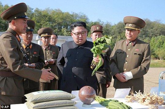 Chính quyền ông Donald Trump lần đầu thừa nhận liên lạc trực tiếp với Triều Tiên - Ảnh 4.