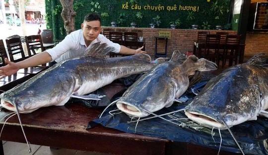 """Ba con cá lăng nặng 280 kg """"bay"""" từ Campuchia về Đà Nẵng - Ảnh 1."""