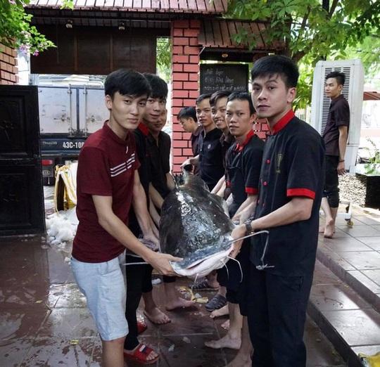 """Ba con cá lăng nặng 280 kg """"bay"""" từ Campuchia về Đà Nẵng - Ảnh 2."""