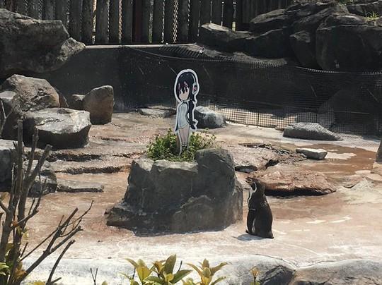 Nhật khóc thương chim cánh cụt tương tư người tình hoạt hình qua đời - Ảnh 3.