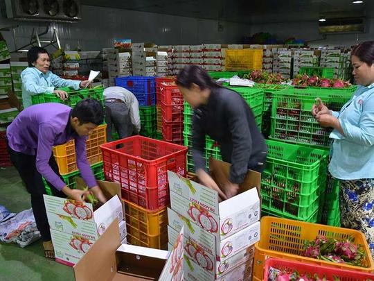 Thị trường Trung Quốc thay đổi, nhiều doanh nghiệp Việt lao đao - Ảnh 1.