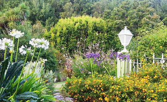 Chốn bình yên bên vườn hoa đẹp như thiên đường của bà lão 83 tuổi - Ảnh 2.