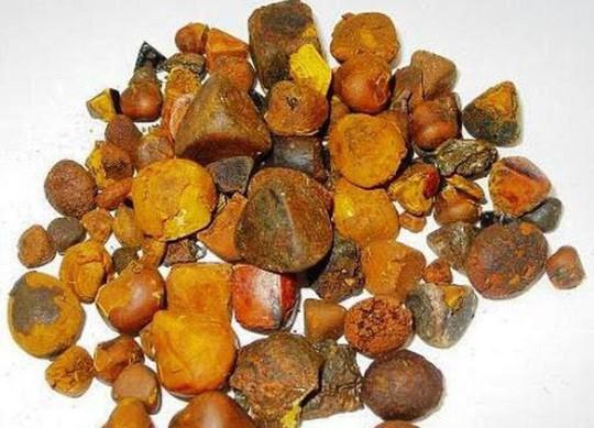 Sỏi mật trâu bò đắt như vàng ròng: 300 triệu/kg - Ảnh 2.
