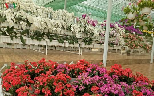 Ngắm ngàn hoa đua sắc tại làng hoa nổi tiếng ở Đà Lạt - Ảnh 1.