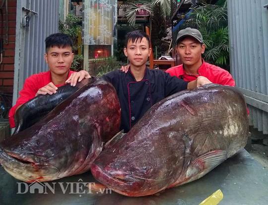 Cận cảnh cặp cá leo khủng nặng hơn1 tạ xuất hiện ở Thủ đô - Ảnh 1.