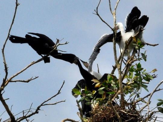 Đắm mình trong thế giới chim muông hoang dã Tam Nông - Ảnh 1.