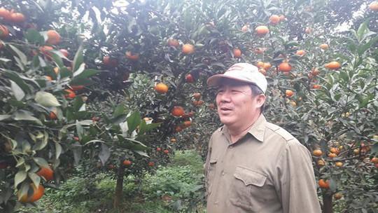 Cam Cao Phong còn 20.000 đ/kg, lo vỡ trận vì diện tích tăng cao - Ảnh 2.