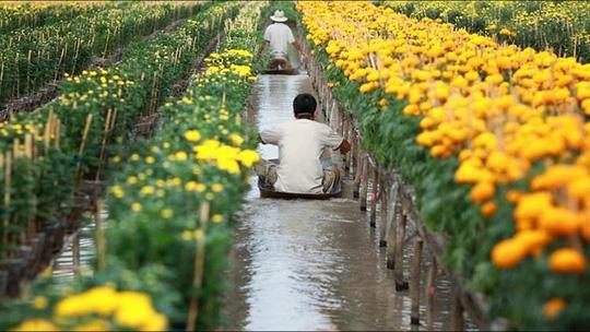 Làng hoa lớn nhất Nam bộ Sa Đéc tất bật vào mùa Tết - Ảnh 2.