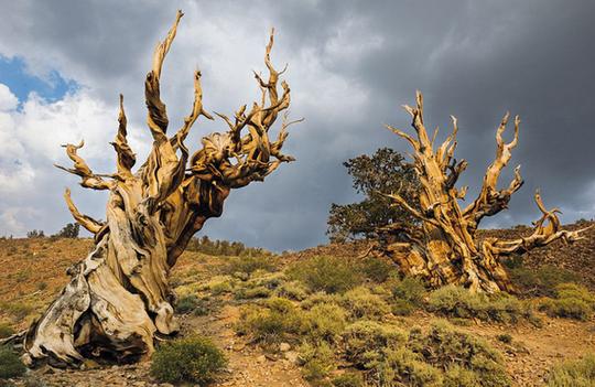 Ngắm những thân cây độc lạ trên thế giới - Ảnh 1.