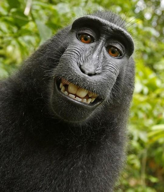 Khỉ hoang dã thành ngôi sao mạng xã hội nhờ nụ cười dễ thương - Ảnh 1.