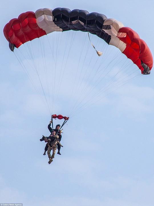 Độc đáo những chú chó anh hùng nhảy dù cứu voi - Ảnh 2.