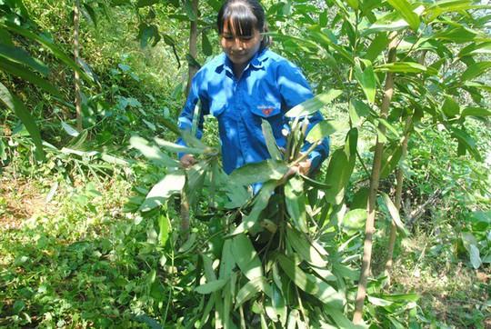 Kỳ tích xóm biệt thự tiền tỷ giữa rừng quế ở vùng đất Phong Hải - Ảnh 1.