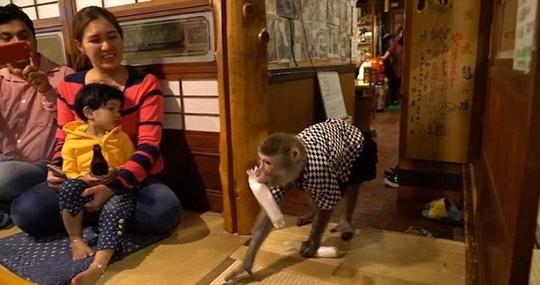 Thuê khỉ làm... bồi bàn, quán rượu ở Nhật Bản gây sốt - Ảnh 2.