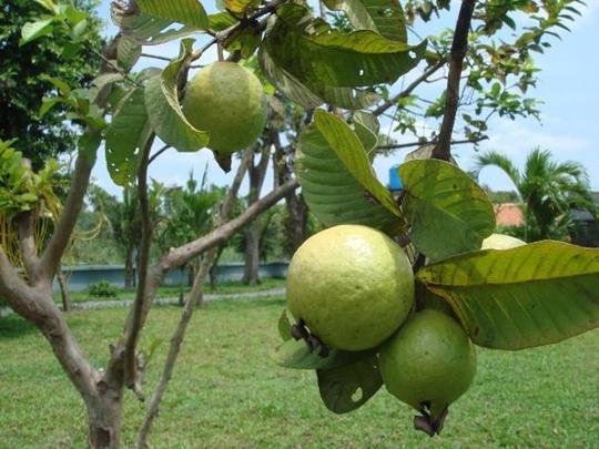 Vườn cây ăn trái 4 tỉ đồng như công viên của bà mẹ 2 con tại TP HCM - Ảnh 11.