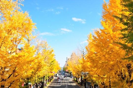 Những đường cây mùa thu đẹp nhất thế giới - Ảnh 11.