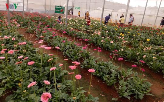 Ngắm ngàn hoa đua sắc tại làng hoa nổi tiếng ở Đà Lạt - Ảnh 11.