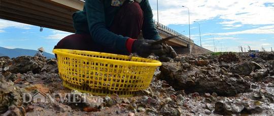 Săn hàu dưới chân cầu Nhơn Hội, TP Quy Nhơn - Ảnh 4.