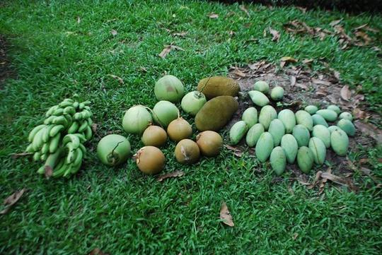 Vườn cây ăn trái 4 tỉ đồng như công viên của bà mẹ 2 con tại TP HCM - Ảnh 12.