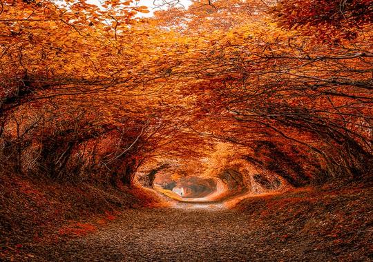 Những đường cây mùa thu đẹp nhất thế giới - Ảnh 12.