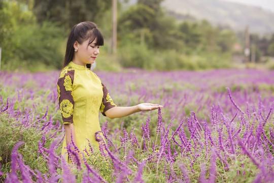 Ngẩn ngơ với thung lũng hoa ở cao nguyên Lào Cai - Ảnh 4.