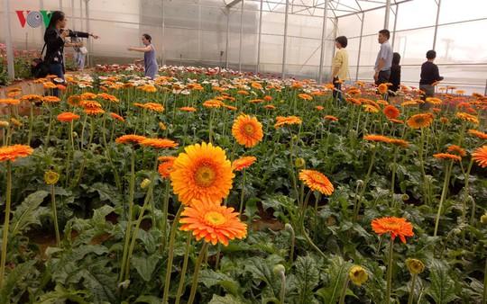Ngắm ngàn hoa đua sắc tại làng hoa nổi tiếng ở Đà Lạt - Ảnh 12.