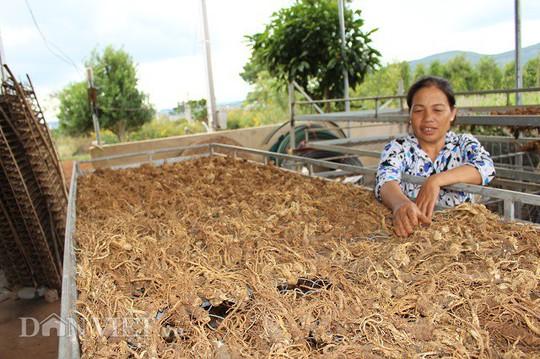 Suýt bị vợ bỏ vì mê trồng sâm, giờ ung dung đút túi nửa tỷ/năm - Ảnh 4.