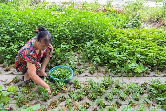 Kiểu trồng rau có 1 không 2 của người Hà Nội - Ảnh 13.