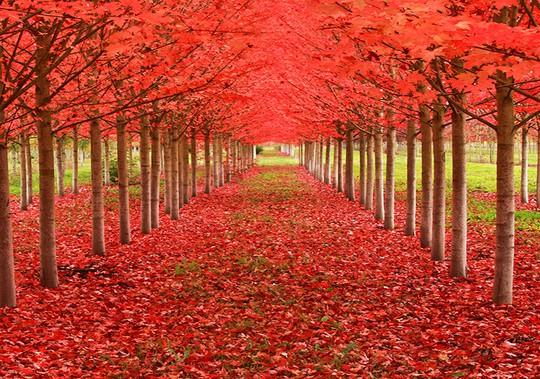 Những đường cây mùa thu đẹp nhất thế giới - Ảnh 13.