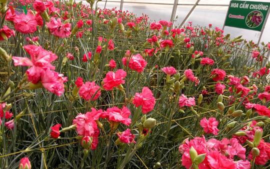 Ngắm ngàn hoa đua sắc tại làng hoa nổi tiếng ở Đà Lạt - Ảnh 13.
