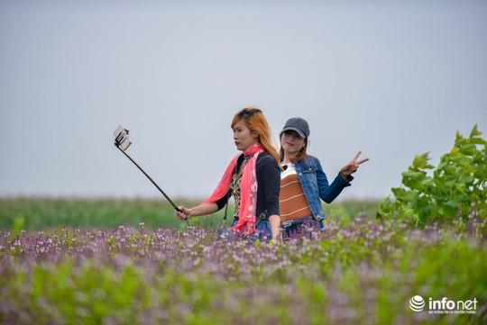 Thực hư cánh đồng hoa Lavender ở ngoại ô Hà Nội - Ảnh 13.