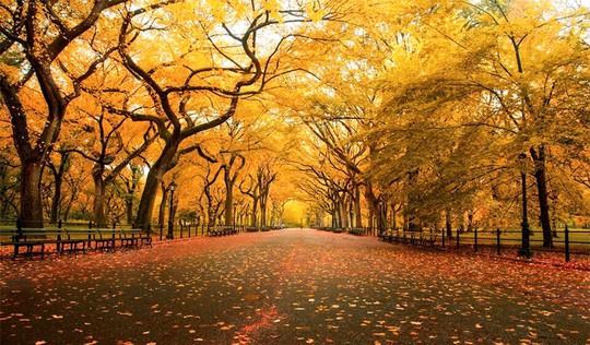 Những đường cây mùa thu đẹp nhất thế giới - Ảnh 14.