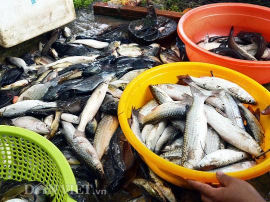 Mỗi đợt thuốc cá nông dân thu trung bình từ 3-5 triệu đồng