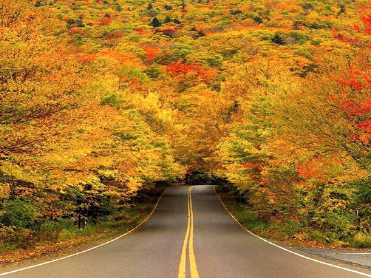 Những đường cây mùa thu đẹp nhất thế giới - Ảnh 15.