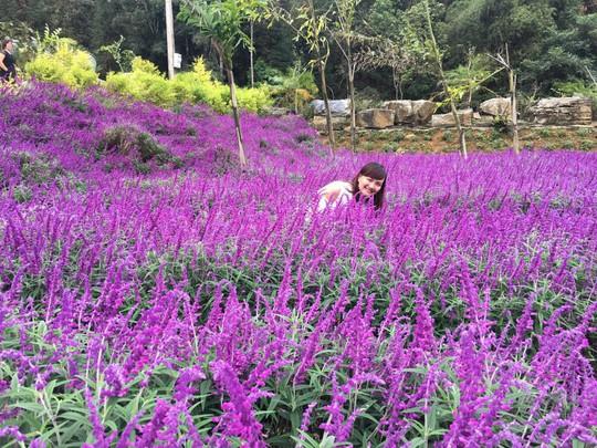 Ngẩn ngơ với thung lũng hoa ở cao nguyên Lào Cai - Ảnh 5.