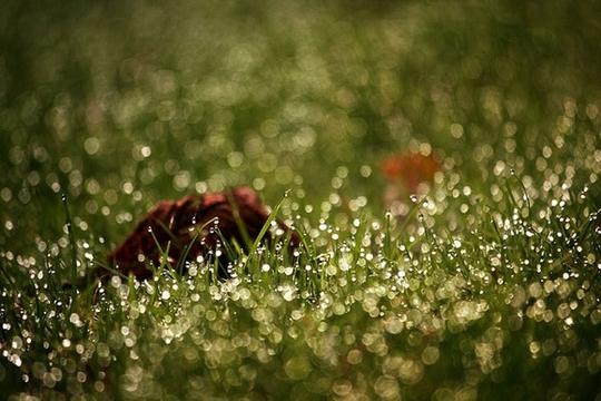 Vẻ đẹp của sương sớm trong nắng ban mai - Ảnh 16.