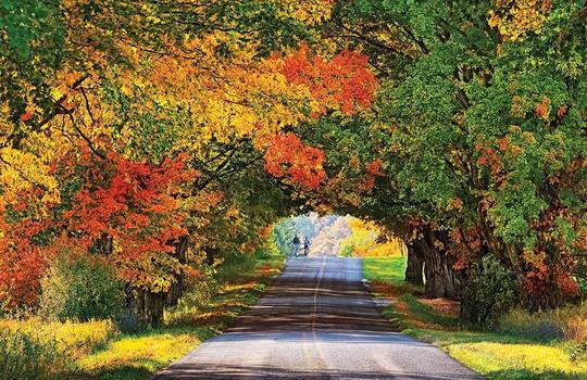 Những đường cây mùa thu đẹp nhất thế giới - Ảnh 16.