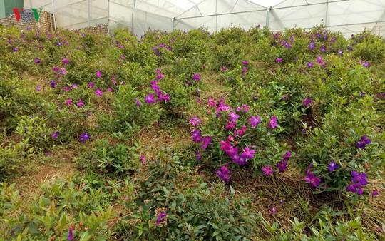 Ngắm ngàn hoa đua sắc tại làng hoa nổi tiếng ở Đà Lạt - Ảnh 16.