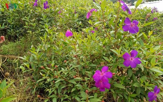 Ngắm ngàn hoa đua sắc tại làng hoa nổi tiếng ở Đà Lạt - Ảnh 17.