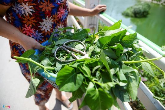 Kiểu trồng rau có 1 không 2 của người Hà Nội - Ảnh 19.