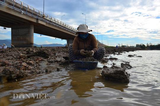 Săn hàu dưới chân cầu Nhơn Hội, TP Quy Nhơn - Ảnh 6.