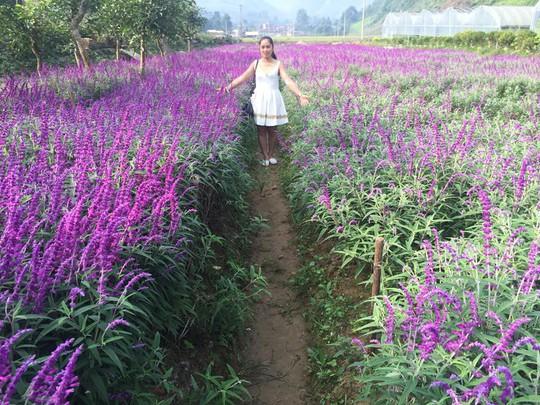 Ngẩn ngơ với thung lũng hoa ở cao nguyên Lào Cai - Ảnh 6.