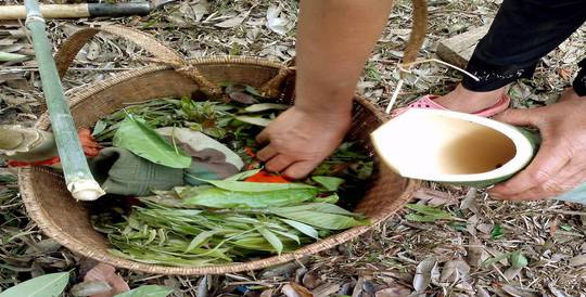Rau bép được người dân địa phương hái từ rừng và cho vào ống lồ ô để nấu canh thụt.