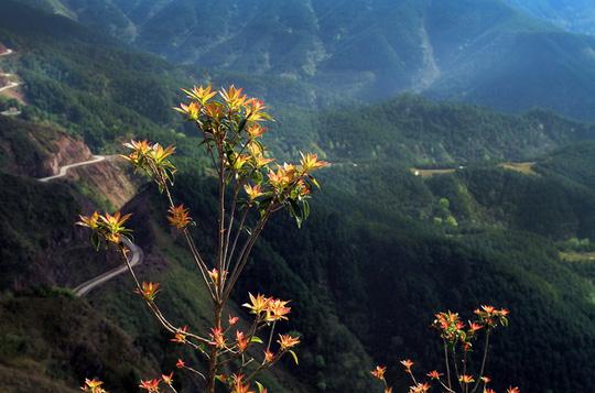 Trên đỉnh núi cao phủ đầy sương lạnh, những nhánh lộc đỏ khỏe khoắn đón ánh mặt trời. Xa xa là cung đường tuần tra biên giới do quân đội xây dựng, uốn lượn mềm mại trên những sườn núi. Nằm ở phía Đông Bắc của tỉnh Quảng Ninh, giáp ranh biên giới với Trung Quốc, cách Hà Nội 270 km, Bình Liêu là huyện miền núi xa xôi. Đến đây, những phượt thủ dễ bị thôi miên với cung đường uốn quanh, khuất sau lưng núi và trốn vào rừng thông. Khoảnh khắc rong ruổi trên cung đường vắng sẽ khiến bất cứ ai cũng có cảm giác chạm vào tự do tuyệt đối trước cảnh sắc tuyệt đẹp. Cung đường dẫn du khách lên cao dần, như lên đến trời. Ở những đoạn cao nhất, du khách được những đám mây trắng ập vào người. Một du khách nào đó đã treo tấm bảng này trên lối đi, khiến cung đường thêm đáng yêu hơn. Sống lưng khủng long hiện ra đẹp đến ngỡ ngàng. Điều kỳ thú nhất mà người lữ hành được thưởng thức là đi bộ ngay trên đỉnh sống lưng đó. Toàn cảnh sống lưng khủng long khiến bao người mê mẩn và khát khao được một lần tìm đến. Cảm giác khoáng đãng, no đầy khí trời và tận hưởng sự kì vĩ khi lên đỉnh núi. Bình Liêu như một thế giới khác, xứng đáng để bạn bỏ một ngày ra khám phá.Hà Quốc Anh