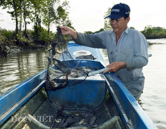 Dùng vợt để vớt cá khi cá ngấm thuốc