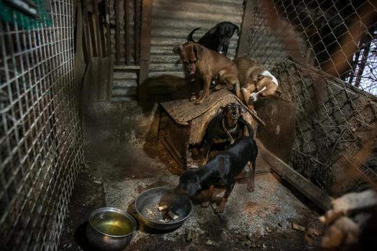 Nơi những con chó sống ở Hàn Quốc trước khi được giải cứu. Ảnh: JEAN CHUNG