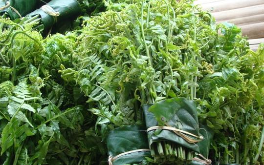 """4 loại """"rau trường thọ"""" mọc đầy ở Việt Nam"""