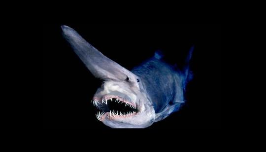 8 sinh vật kỳ dị dưới đáy đại dương - Ảnh 3.