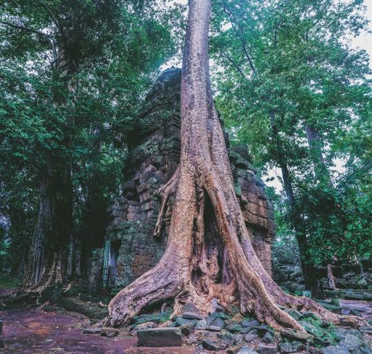 Ta Prohm - ngôi đền của những rễ cây kỳ dị - Ảnh 3.